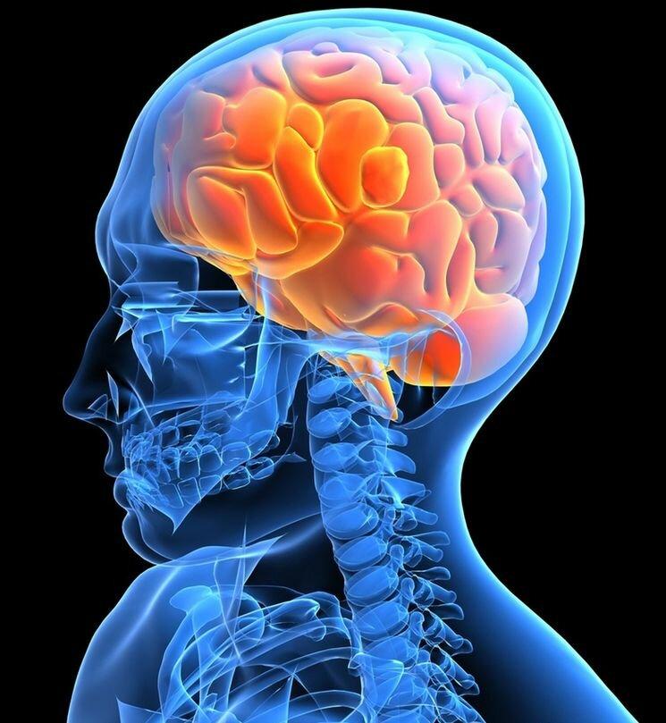 10 неймовірних фактів про нашому мозку.
